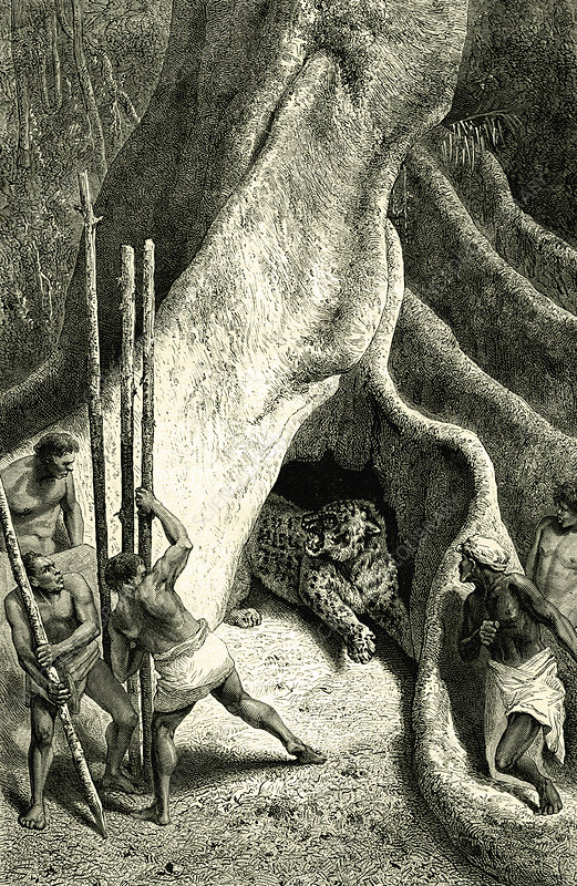 Men hunting a jaguar, 19th C illustration