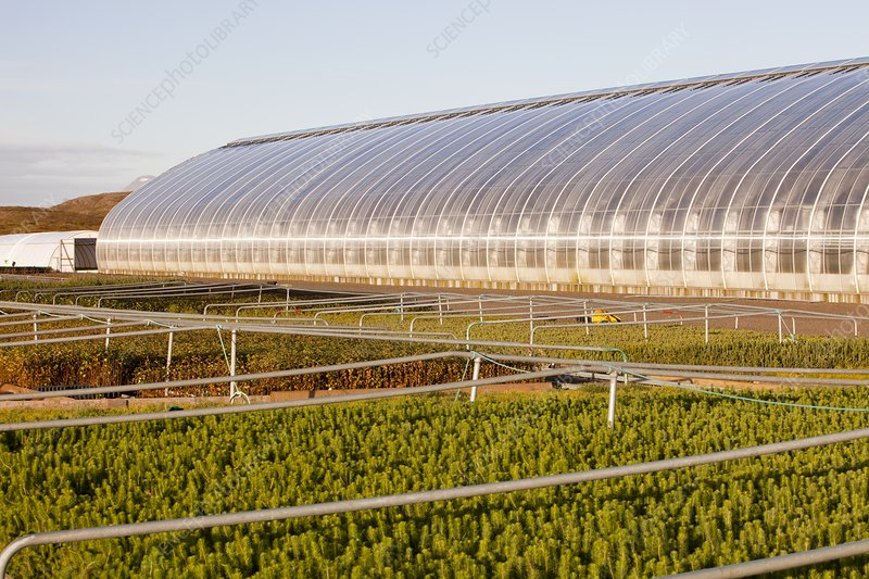 Geothermally heated greenhouses
