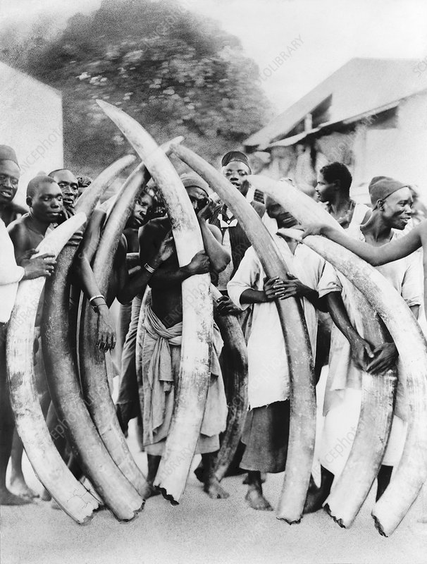 Ivory trade in Africa, historical image