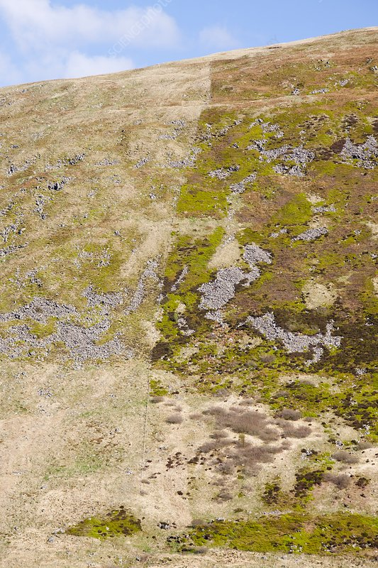 Affect of grazing on moorland vegetation