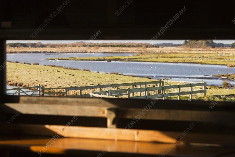 Martin Mere bird reserve, UK