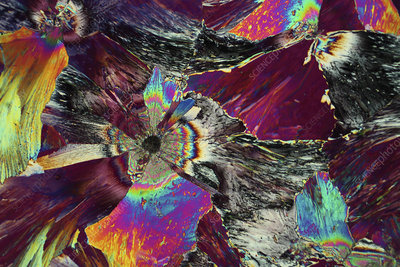 Xylose crystals, light micrograph