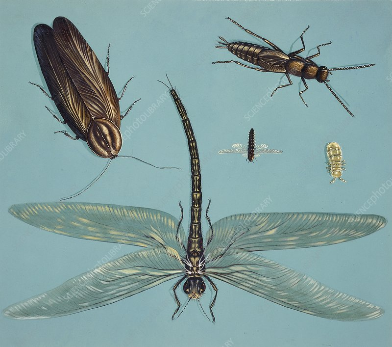 Prehistoric insects, illustration