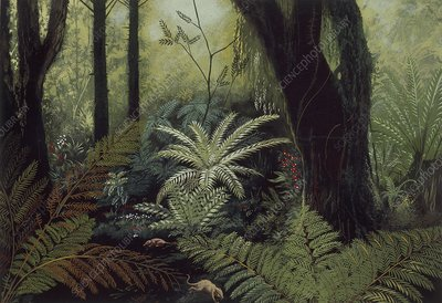 Prehistoric forest, illustration