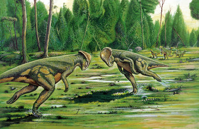 Pachycephalosaurus fighting, illustration