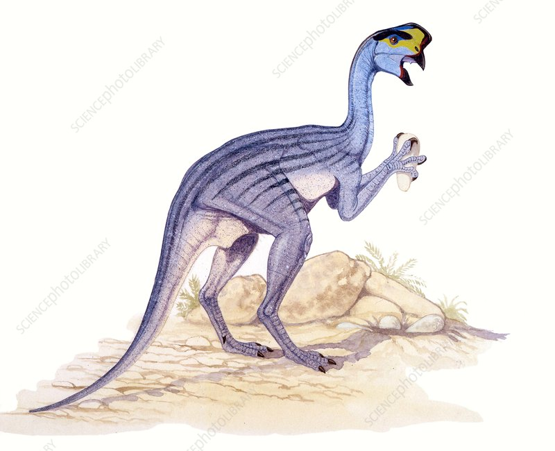 Oviraptor dinosaur, illustration