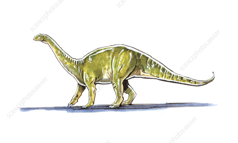 Melanorosaurus dinosaur, illustration - Stock Image C026 ...