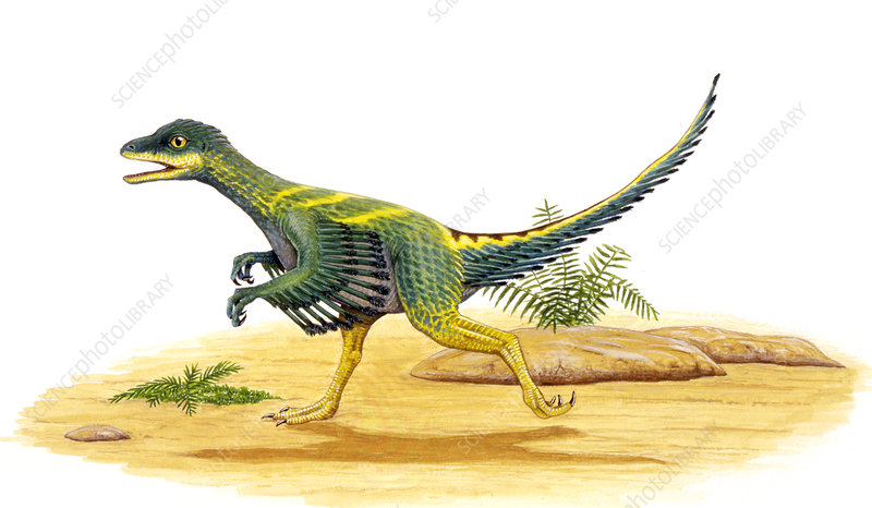 Avimimus dinosaur, illustration