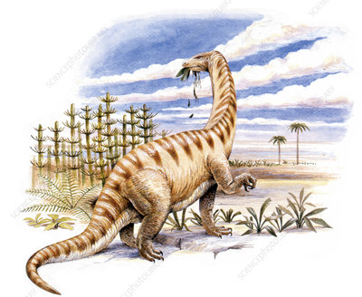 Lufengosaurus dinosaur, illustration