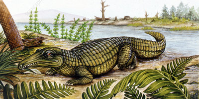 Proterosuchus, illustration