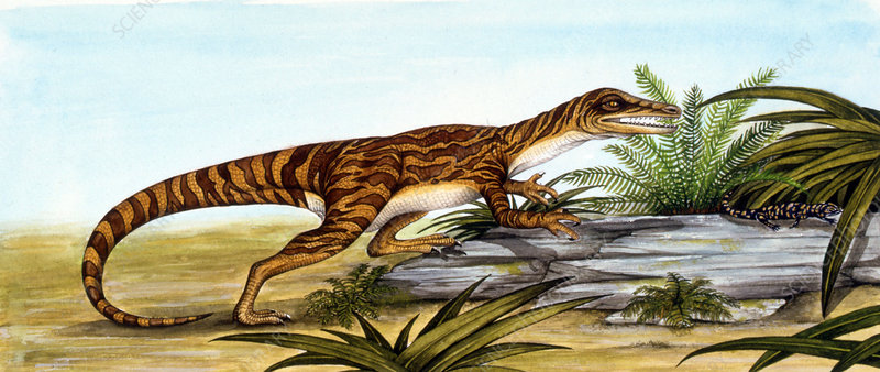 Staurikosaurus dinosaur, illustration