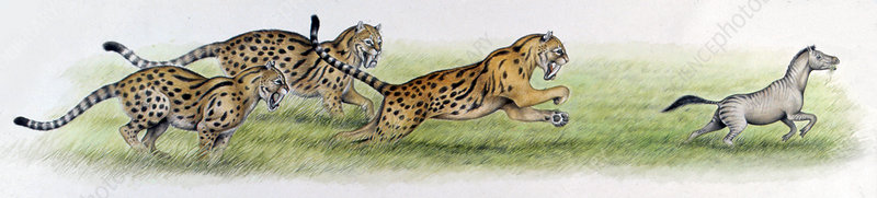 Eusmilus hunting Palaeotherium