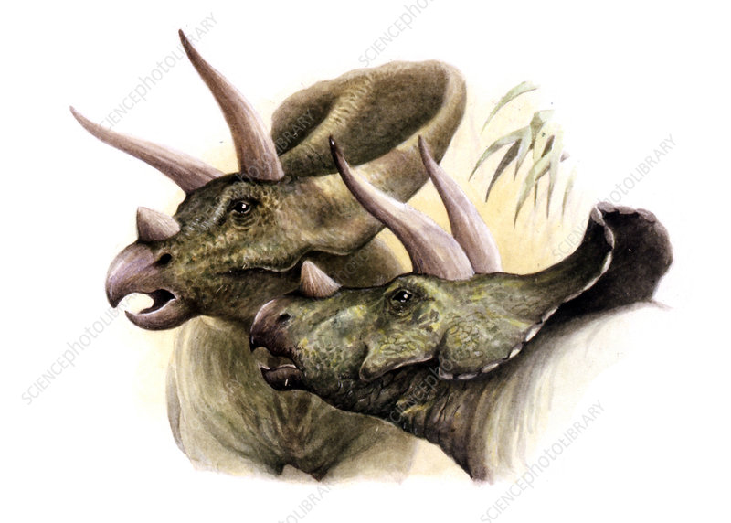 Torosaurus dinosaurs, illustration