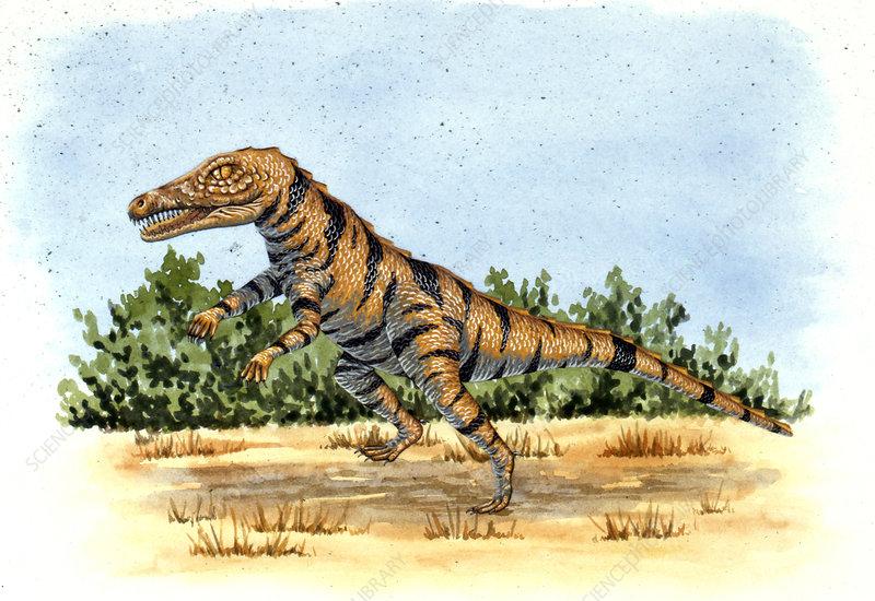 Gracilisuchus prehisto...
