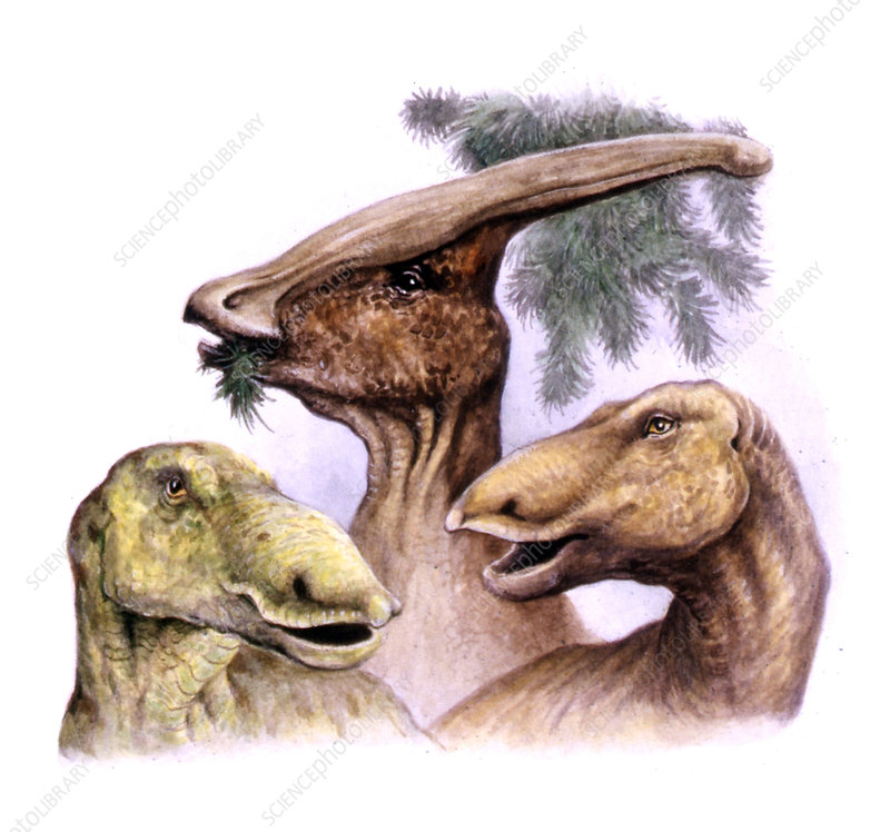 Cretaceous hadrosaurs, illustration