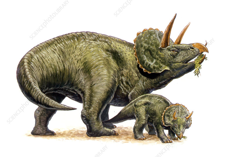 Nedoceratops dinosaurs, illustration