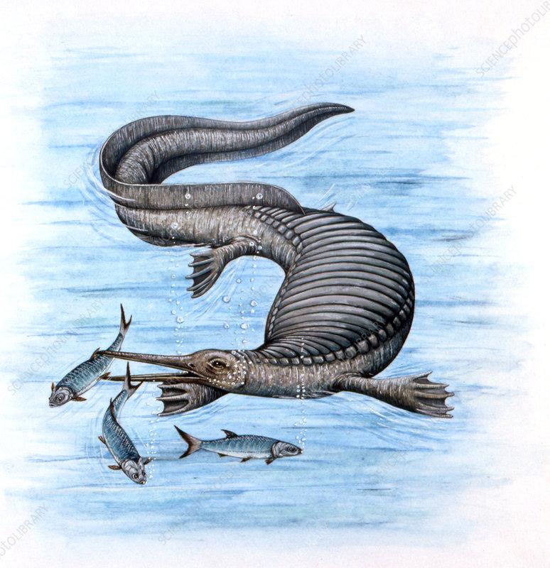 Nanchangosaurus marine dinosaur