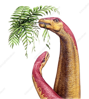 Kotasaurus dinosaurs, illustration
