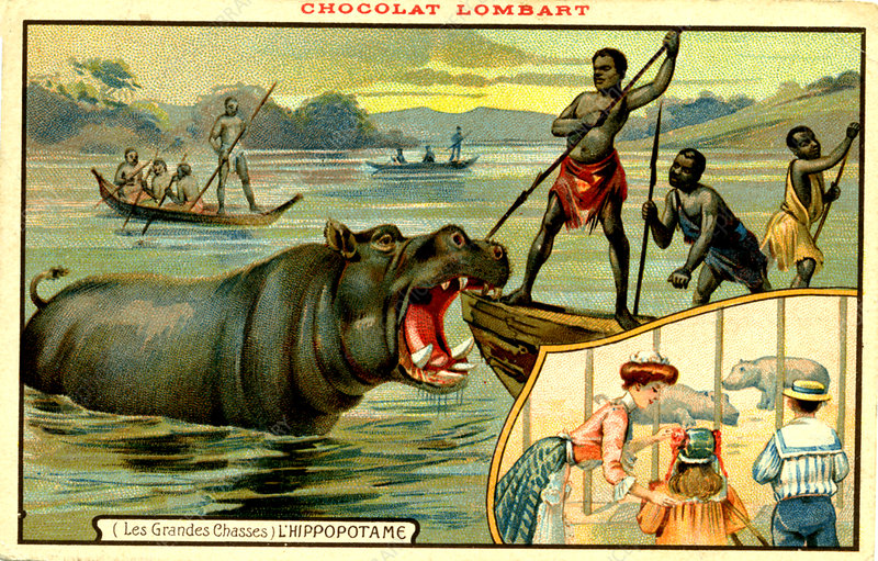 Hippopotamus hunters, illustration