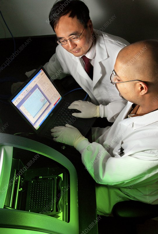 PCR assay in a microbiology lab