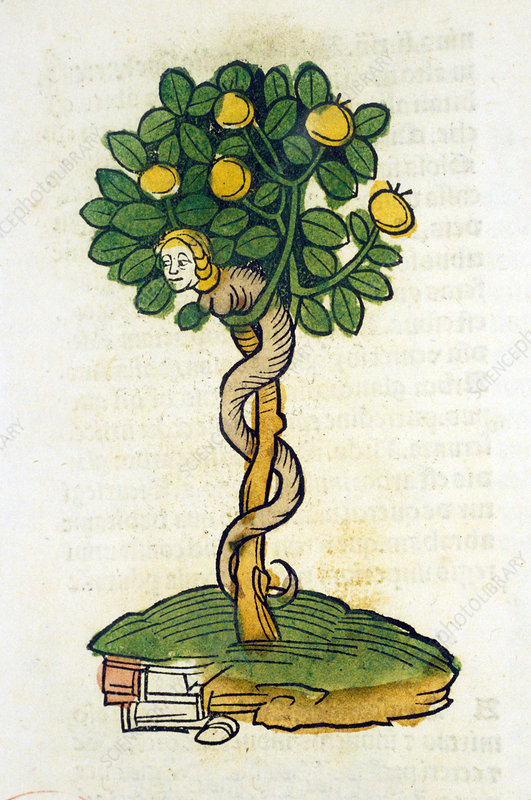 Tree of Knowledge, 15th century