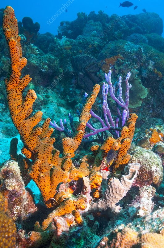 Sponges on a reef