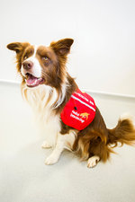Cancer detection dog training