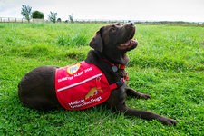 Diabetes alert assistance dog