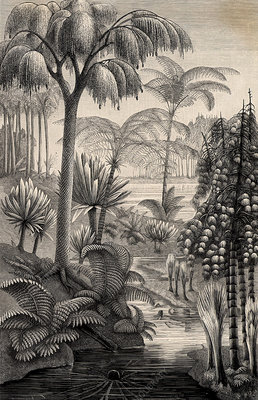 Forest during the Carboniferous period