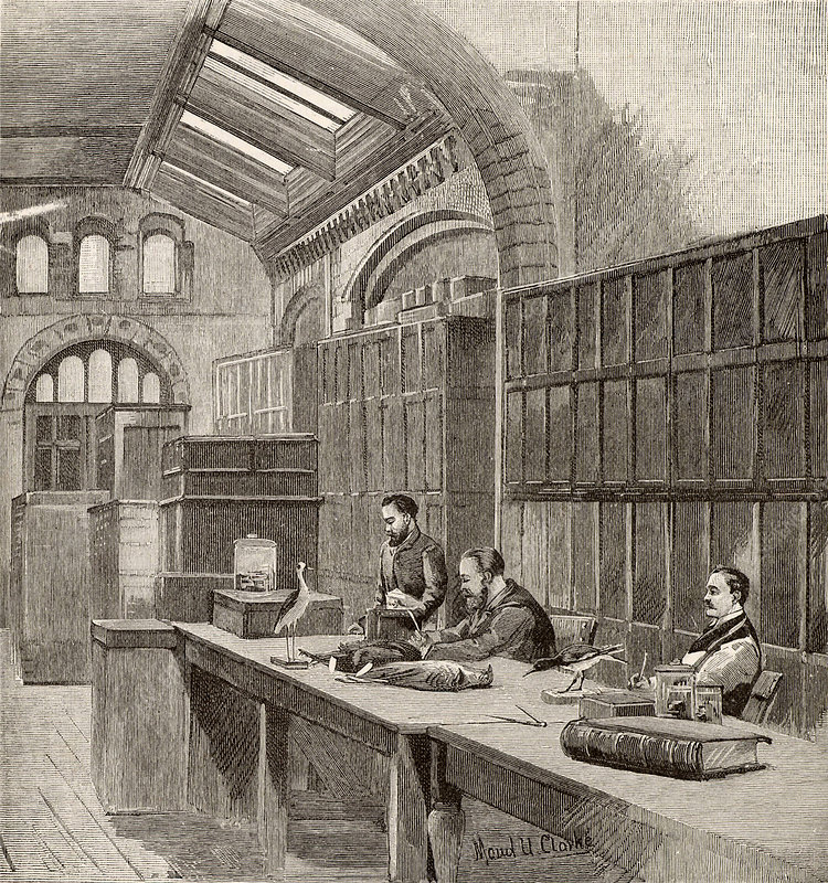 William Henry Flower, English surgeon