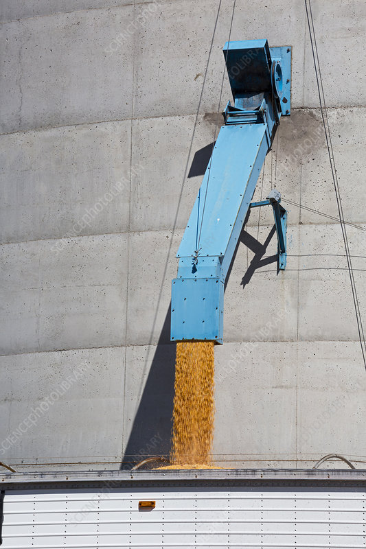 Grain truck being filled at a silo