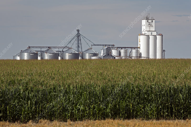 Grain elevator and maize field