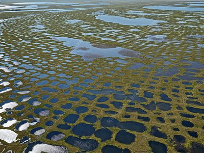 Patterned ground, Lena Delta, Siberia