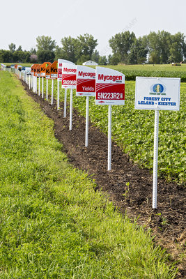 Genetically modified crop signs