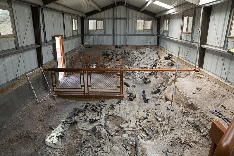 Cleveland-Lloyd Dinosaur Quarry fossils