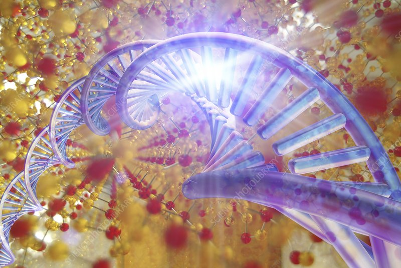 Information storage in DNA and silica
