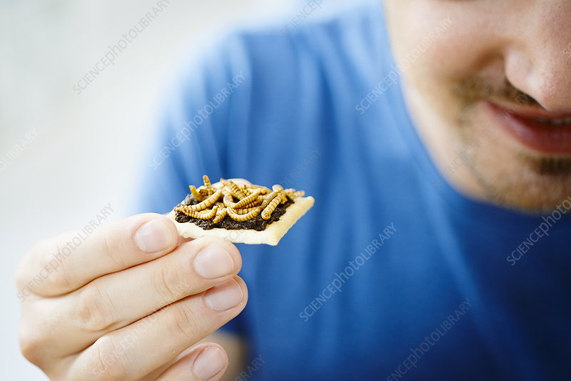 Man eating insect