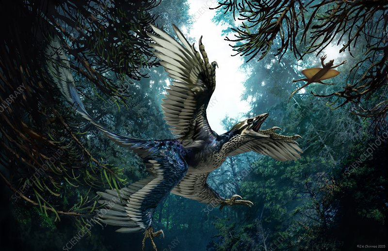 Microraptor, artwork