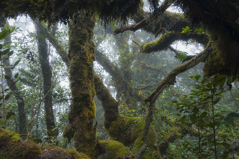 The mossy forest of the Cameron Highlands