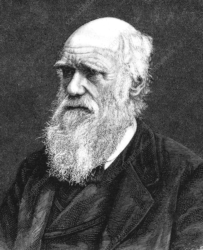 a biography of charles darwin an english naturalist the creator of the theory of evolution Charles darwin's theory of evolution by natural selection falls into this category,  making  darwin was born in 1809 into a well-to-do family  when the chance  came to be the 'scientific person' or naturalist on a planned five-year  the  importance of natural processes but still retained the idea of a creator.