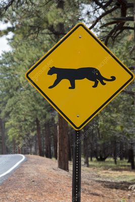 Mountain lion warning sign, Grand Canyon