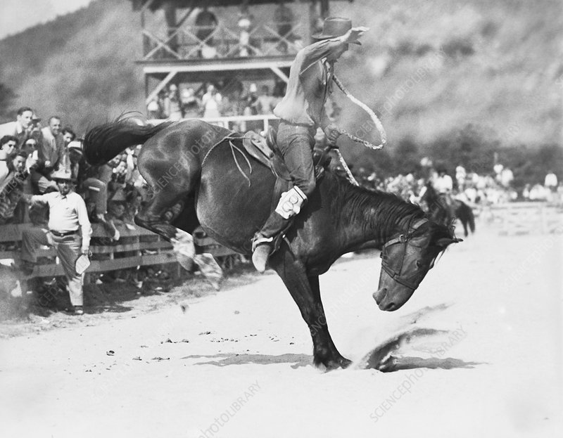 Rodeo, 1955