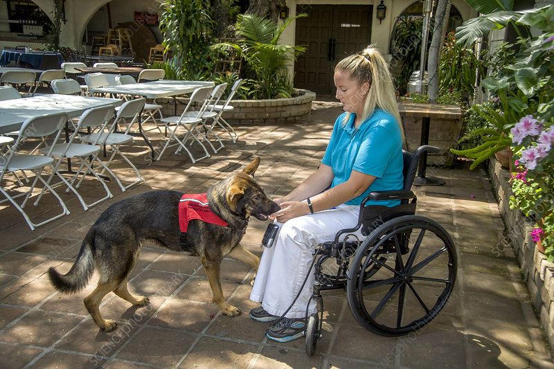 Woman in Wheelchair with Trained Dog