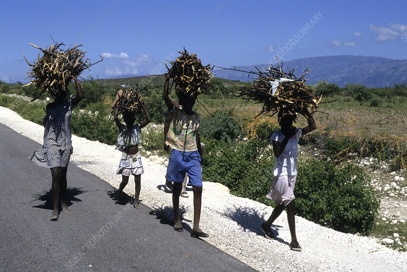 Carrying Firewood, Haiti
