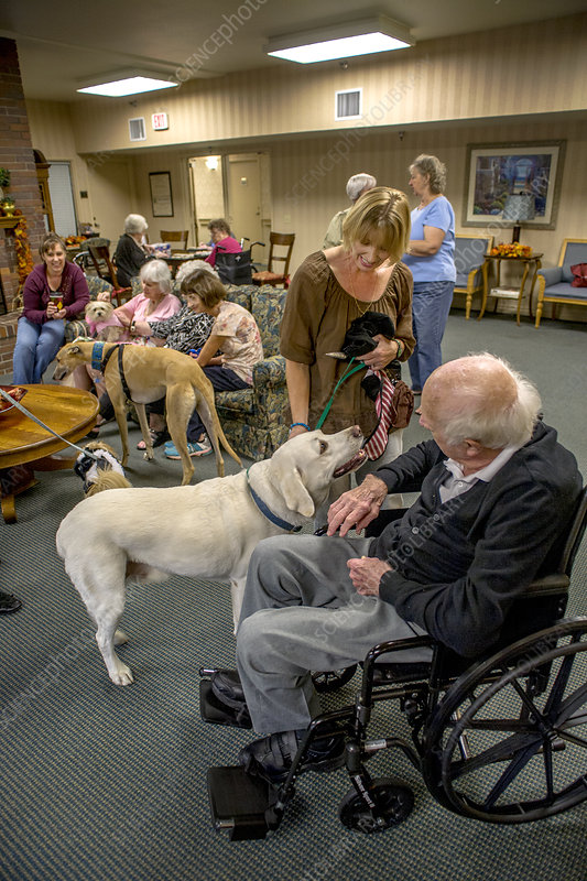 Therapy Dogs in Retirement Home
