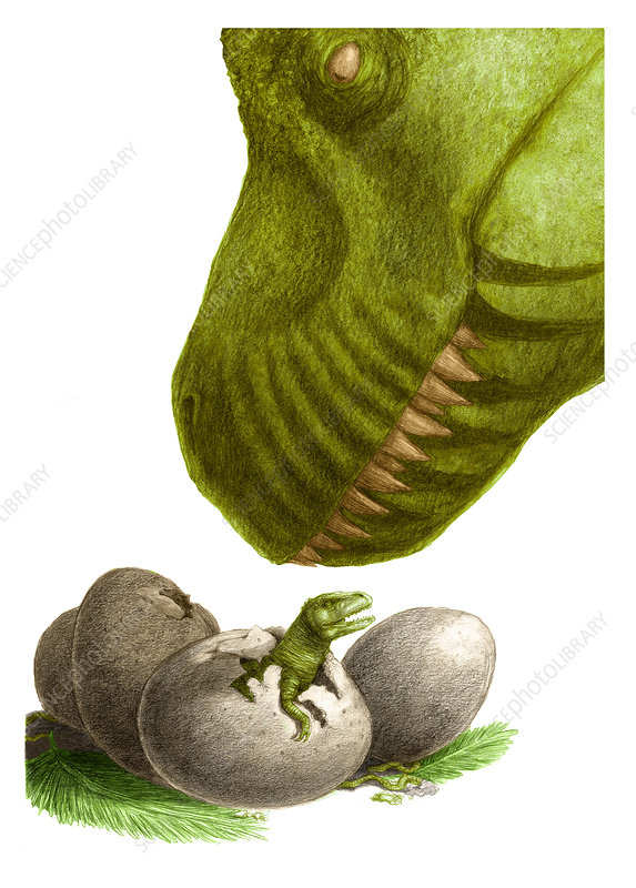 Dinosaur with Eggs, Illustration