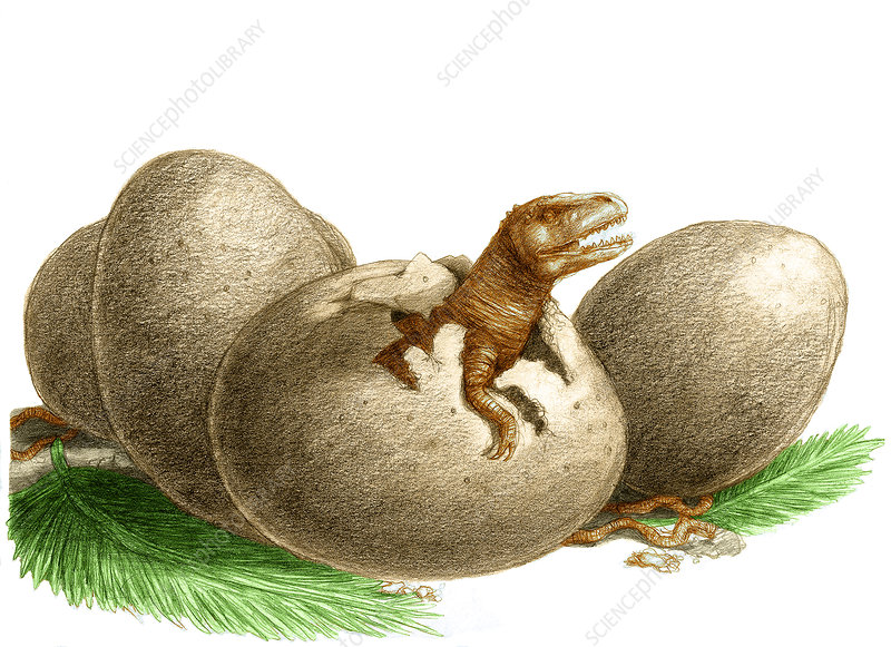 Dinosaur Egg Hatching, Illustration