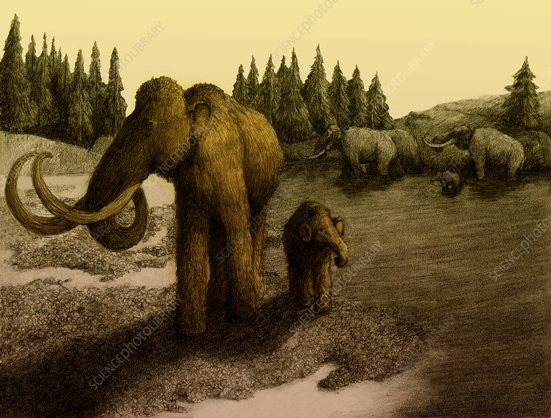 Mammoths, Illustration