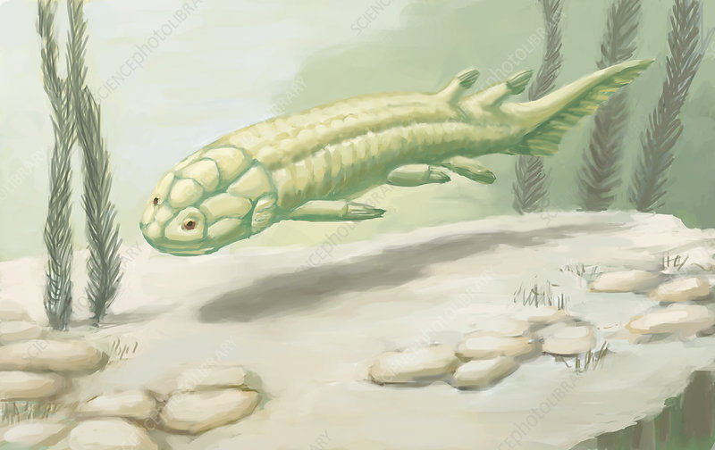 Holoptychius, Illustration