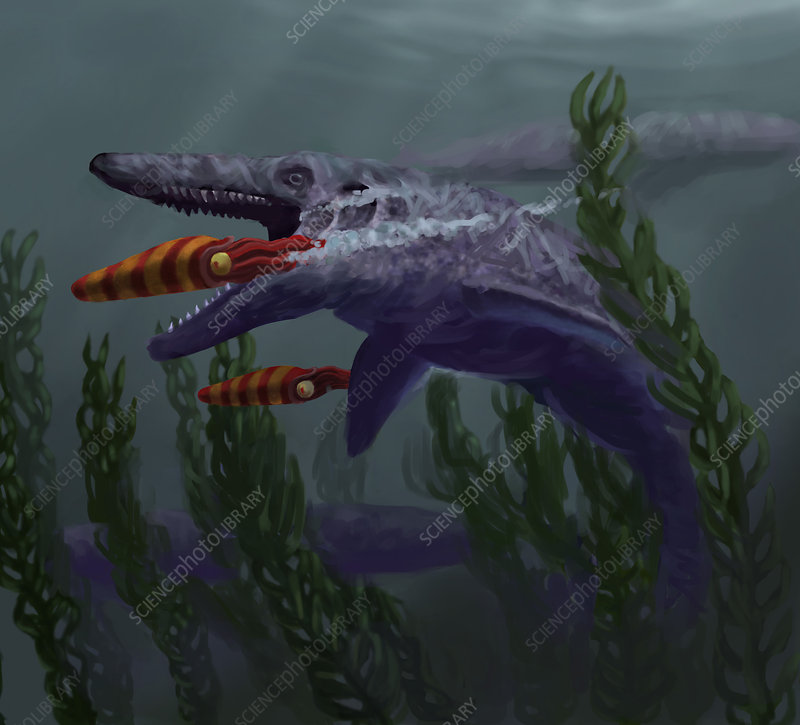 Mosasaur, Illustration